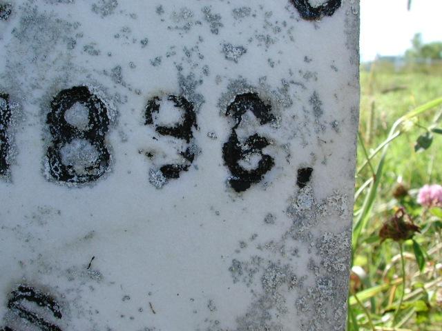 NASH, Thomas (1896) & William (1883) BRA02-3347