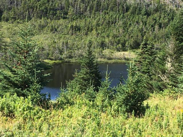 Big Mosquito pond Colinet Island